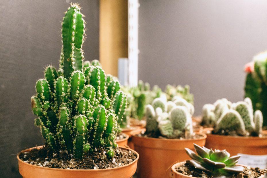 Helppohoitoisimmat huonekasvit – näitä kasveja et onnistu tappamaan!