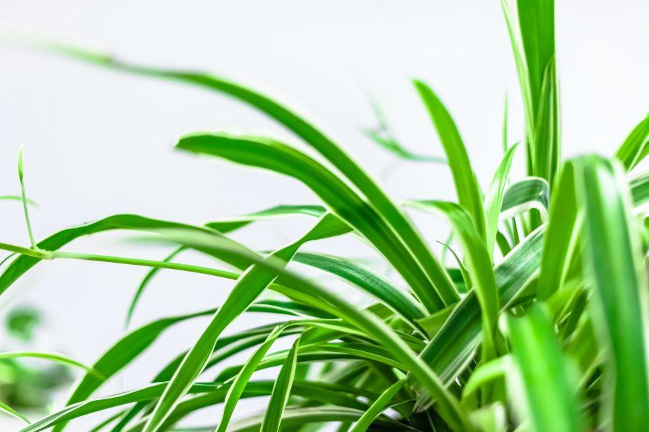 Huonekasveja ympäri maailmaa