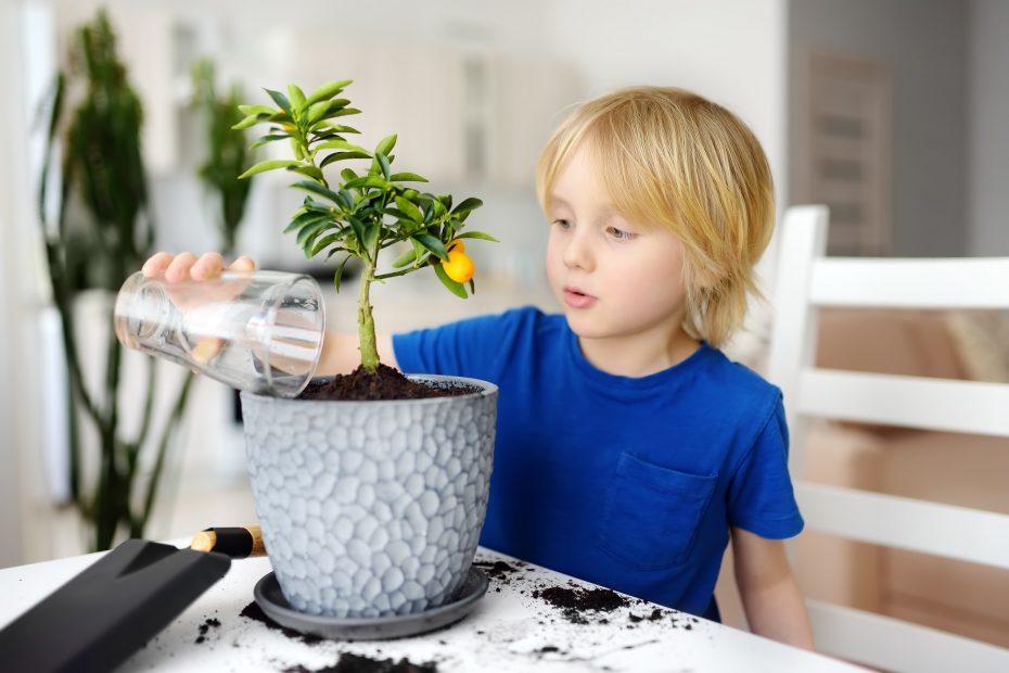Huonekasvien lyhyt hoito-opas – Näin saat kasvisi kukoistamaan!