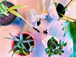 Huonekasvit puhdistavat ilmaa ja piristävät mieltä
