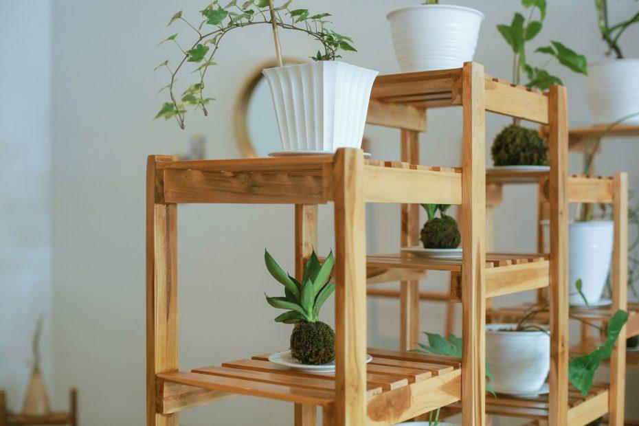 Miten yhdistää kasvit sisustukseen